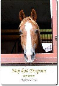 Mój koń Despota